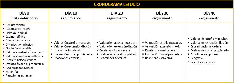 Cronograma del estudio artrosis canina 2